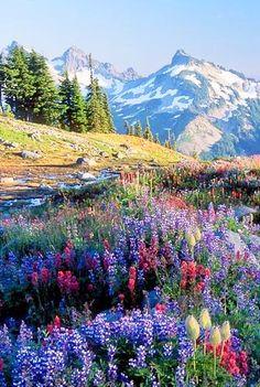 Mount Rainier, Washington, USA breathtaking, such beautiful flowers, and the…