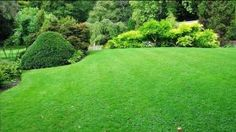 Jim's lawn mowing services in Perth cost is reasonable. We are professional lawn mowers in Perth. Get a FREE Quote for lawn mowing at 131 Visit. Shrubs For Landscaping, Residential Landscaping, Garden Shrubs, Landscaping Company, Garden Grass, Landscaping Ideas, Low Maintenance Shrubs, Landscape Maintenance, Garden Maintenance