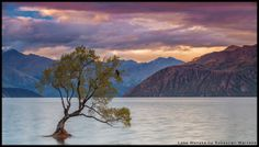 """Lone Sunset"" - a lonely tree partially submerged in Lake Wanaka, New Zealand. [1280x728][OS] photo by Sebastian Warneke"