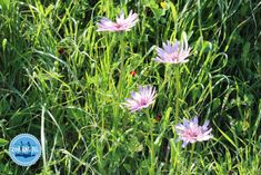 Flora-von-Kreta - Zorbas Island apartments in Kokkini Hani, Crete Greece 2020 Flora, Special Flowers, Crete Greece, Different Flowers, Flower Photos, Wild Flowers, Island, Hani, Apartments