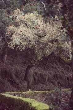 Deixa entrar o sol | Tapada de Mafra | Portugal