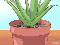 Image intitulée Care for Your Aloe Vera Plant Step 8