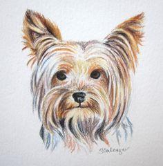 Yorkie Dog Colored Pencil Drawing Original by ClarityArtDesign