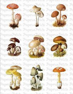 Mushroom Images, Mushroom Art, Fall Canvas Painting, Mushroom Tattoos, Scientific Drawing, Hippie Painting, Woodland Art, Sketchbook Project, Witch Aesthetic