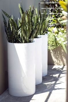 Our Contemporary planters come in a large variety of shapes and styles to compliment any modern home and garden. Contemporary Outdoor Furniture, Contemporary Planters, Modern Planters, Outdoor Planters, Contemporary Landscape, Garden Planters, Planter Pots, Tree Planters, Outdoor Decor