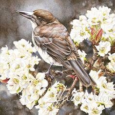 Butcherbird and Nashi, Heidi Willis