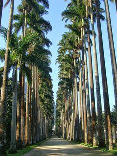 Jardim Botânico do Rio de Janeiro.