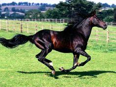 Exotics Horses / Horses Exotic: Azteca