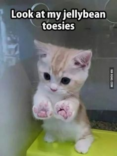 27 great cat pictures when life is shitty again - And this tiny kitten with the perfect paws. And this tiny kitten with the perfect paws. And this ti - Cute Cats And Kittens, I Love Cats, Crazy Cats, Kitty Cats, Adorable Kittens, Cat Paws, Ragdoll Kittens, Kittens Cutest Baby, Dog Cat