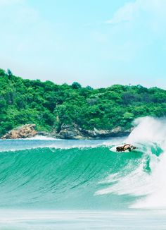 The Emerald Green of Costa Rica's Forests