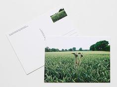 """POSTKARTE """"KORNFELD"""" CARLOS KELLA – KÜNSTLERKARTE VON UNITED AMBIENT MEDIA / Ein Motiv aus dem Bildband PHOTOS, LOVE & STORIES. / Fotografie: Carlos Kella / Platinumformat: 17 x 12 cm / Postkartenkarton 260g/m2 / Ausführung: Einseitiger UV-Lack vorderseitig / Preis pro Stück: 1,30 EUR (inklusive MwSt., zuzügl. Versandkosten) Lieferung per Post als Brief in 1 - 3 Werktagen"""