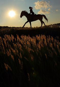 This will be me in only days to come! Now that I have my horse, he just has to get used to the hay field. :D
