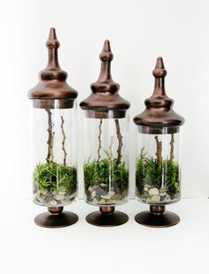 Apothecary Terrarium Set of 3: A Walk In the Forest