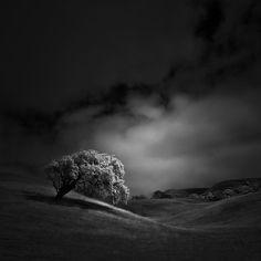 <b>White Tree X</b>