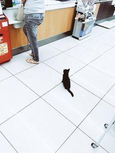 「お会計しようと思ってレジに行ったら、わたしの前のお客様さんが子猫でした。おつかい頼まれたのかな。」のYahoo!検索(リアルタイム)…