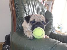 Carlin fan de tennis