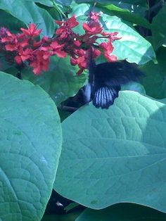 Butterfly Garden Denver Co