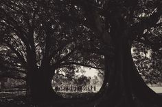 Kat Stanley Photography :: Terrara House :: Country weding :: Outdoor ceremony :: Black and white photography