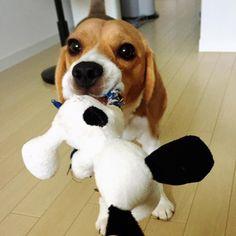 """Poor Snoopy"
