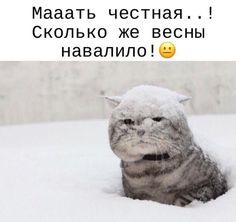 Смешные Мемы, Я Люблю Кошек, Кошки И Котята, Доброе Утро, Шутки, Кошки, Смешно, Картинки