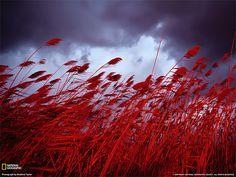 La vita a colori: il rossonelle grandi foto della settimana » Fotografia di Medford Taylor