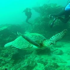 Turtle in Sodwana Bay, South Africa