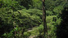 Un equipo internacional de arqueólogos descubre en una expedición llevada a cabo en la espesa selva de La Mosquitia, al este de Honduras, la milenaria 'Ciudad Blanca', también conocida como 'Ciudad del Dios Mono', que fue poblada por una misteriosa cultura que se presume existió en la época precolombina.