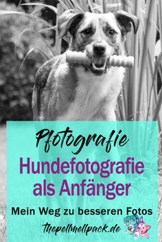 Pfotografie – my evolution from the mobile phone to the DSLR - Photography Studio Dslr Photography Tips, Mobile Photography, Van Life Blog, Rhodesian Ridgeback, Tier Fotos, Photo Diary, Cool Landscapes, Goldendoodle, Types Of Art