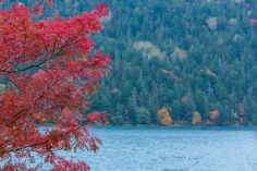 Autumn colors by Hiroteru Hirayama on 500px