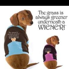 Love this for Rascal =) Dog clothes Pet Dogs, Dog Cat, Pets, Weiner Dogs, Doggies, Dog Love, Puppy Love, Cute Dog Clothes, Dachshund Love