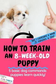 Basic Dog Training, Puppy Training Tips, Potty Training, House Training A Puppy, Puppy Crate Training Schedule, Dog Commands Training, Agility Training, Toilet Training, Crate Training Puppies