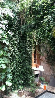 A customer's greenhouse with Ficus pumila and Philodendron on the walls. Ficus Pumila, Garden Inspiration, Indoor Plants, Landscape Designs, Exterior, Walls, Gardening, Vegetable Garden, Inside Plants