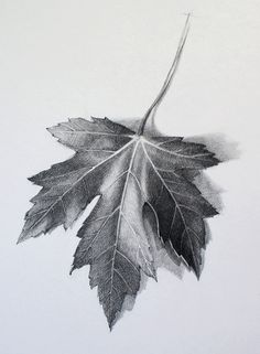 pencil drawing leaf - Google Search