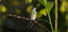 Mindo: papillons, colibris et chocolat | Une québécoise à Quito