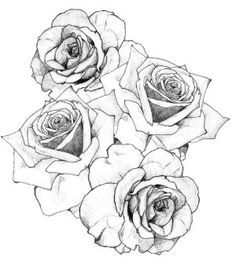 black and white rose tattoo drawing - Google Search