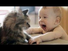 Los bebés riéndose histéricamente en Compilación Gatos 2014 [NEW HD] - YouTube