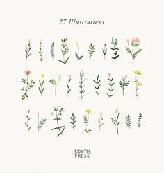 Botanical Clipart Wildflower Hand Drawn Flowers Watercolor Png Flowers Clip A . - Botanical clipart wildflower hand drawn flowers watercolor png flowers clip art i - Art And Illustration, Leaves Illustration, Floral Illustrations, Pattern Illustration, Diy Tattoo, Tattoo Hand, Wrist Tattoo, Tattoo Fonts, Tattoo Quotes