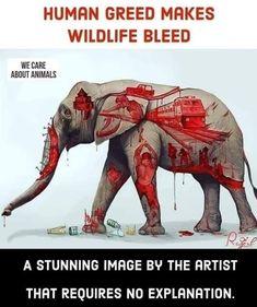 Greed, Animal Rights, Wildlife, Artist, Movie Posters, Animals, Image, Veganism, Animales