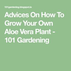 Advices On How To Grow Your Own Aloe Vera Plant - 101 Gardening