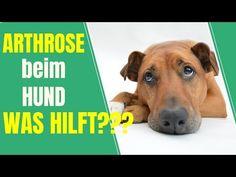 Arthrose beim Hund - Was hilft???   TIPPs zur Behandlung und Vorbeugung!!! - YouTube Dogs, Animals, Youtube, Dog Owners, Vet Office, Health And Fitness, First Aid, Cats, Animales