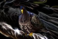 #Pigeon #Pigeons #PigeonsDay   Beautiful fractal pigeon by artist james ahn.     © Rateitart.com // All Rights Reserved.   All Artwork, Photography, and Designs are copyrighted.   Do not use my works for commercial purposes.   Do not use my works to create derivative works.     Thank You.