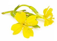 Discover Evening Primrose Oil's health benefits, such as treating skin disorders, whooping cough, boils, PMS, menopausal disorders, and promoting weight loss.