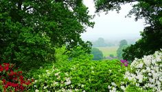 View from Bowood House gardens, original photographic print, Rhododendrons, nature, countryside, British by ByGaddArtandDesign on Etsy