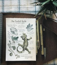 """I learned a lot about the Crested Gecko, aka """"Correlophus ciliatus"""", while creating this custom journal page for a client. Apparently this species was thought to have been extinct in the wild for a time until it was rediscovered in 1994! DM/email me if you'd like your own illustrated journal page with interesting facts about an animal/creature of your choice! I will also be offering it as a listing on my Etsy site #naturalscienceillustration"""
