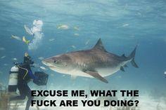 Google Image Result for http://iruntheinternet.com/lulzdump/images/excuse-me-shark-what-doing-12898620885.jpg