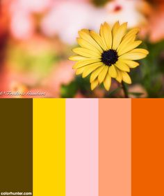 Happy Days Of May Color Scheme from colorhunter.com