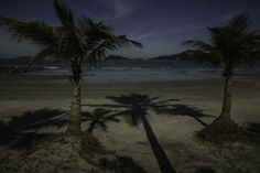 Coconut trees by Roberto Epifänio on 500px