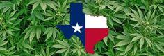Gobernador dice Texas no legalizará la marihuana medicinal