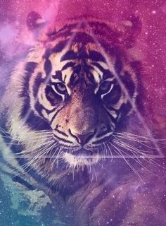 Tiger <3 #dope. I like triangles.