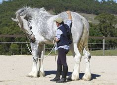 19.2 hands is 6.4 feet at the withers or shoulder